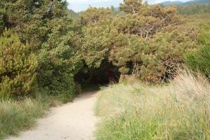 237 Nehalem State Park_