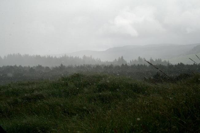 247 Nehalem State Park_