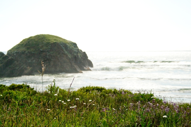 270 Oregon Coast