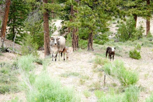 Southern Utah Tour I 2014 53